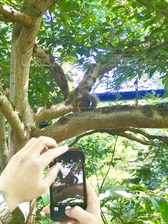 木の上のリスをスマフォでパシャリ。の写真・画像素材[2283229]