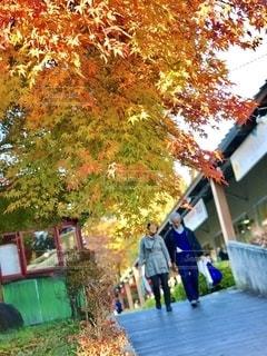 八ヶ岳のアウトレットは紅葉も綺麗で良い散歩道でした。の写真・画像素材[2511093]