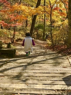 紅葉の遊歩道を子供と散策の写真・画像素材[2511344]
