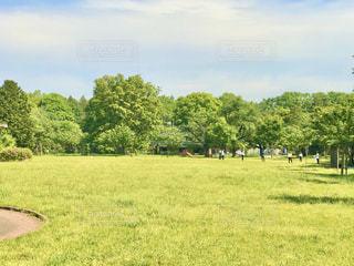 緑の芝生と青い空の写真・画像素材[2982347]