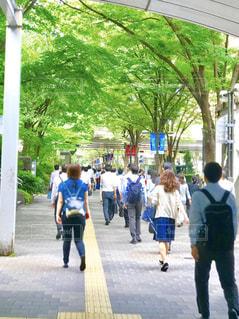 新宿都庁方面の朝の通勤風景の写真・画像素材[3011368]