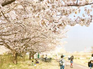 多摩川の堤防沿いの遊歩道は桜並木が綺麗で、散歩やお花見の人々で賑わってます。焦点加工で人物が特定されないようにしています。の写真・画像素材[3034111]
