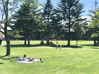 綺麗な芝生にレジャーシートを広げてゴロン。気持ちよさそうです。の写真・画像素材[3054440]