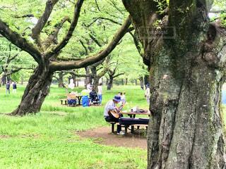 公園の新緑の樹々の間から気持ちの良い歌が聞こえてきました。  焦点加工で人物が判別されないようにしています。の写真・画像素材[3139894]