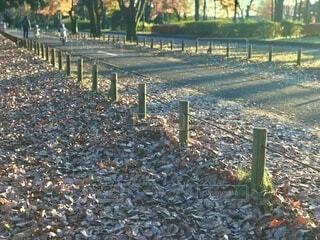 遊歩道脇の落ち葉の絨毯の写真・画像素材[3712546]