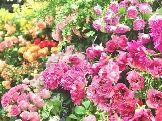 ピンクの花束の写真・画像素材[4166756]