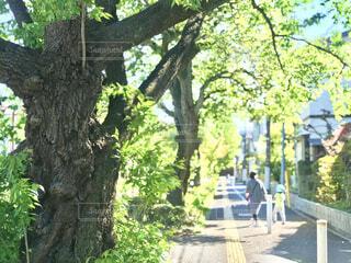 木漏れ日の中の散歩の写真・画像素材[4210893]