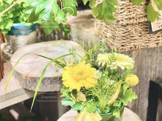 黄色い花の写真・画像素材[4315283]