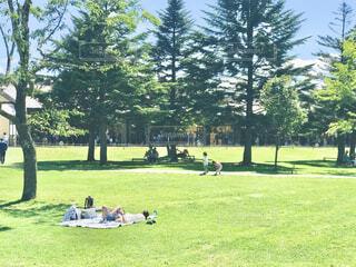 ピクニック日和の写真・画像素材[4358272]