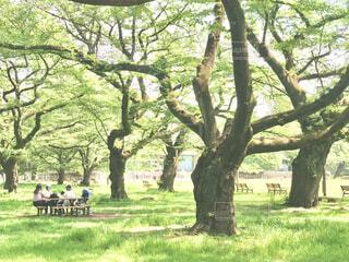 新緑の公園での写真・画像素材[4408643]