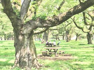 新緑の公園での写真・画像素材[4408642]