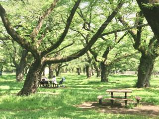 木々の木漏れ日と影の写真・画像素材[4415033]