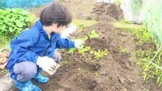子ども,風景,屋外,草,人物,人,地面,少年,畑,若い,農作業,畑仕事,イラスト風,少し,アニメーション,パーソン,ジャガイモ堀