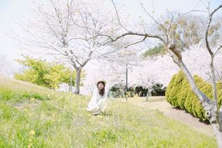 女性,1人,風景,花,春,桜,木,菜の花,花見,お花見,イベント,コンテスト