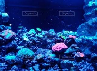 魚,水族館,水面,岩,水中,海底
