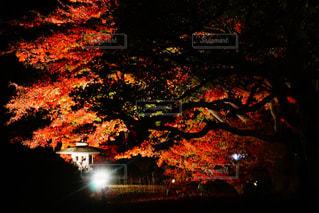 夜,紅葉,庭,赤,庭園,日本