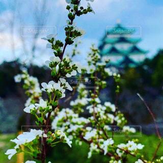 風景,花,春,城,名古屋城