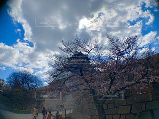 自然,空,花,春,桜,木,屋外,花見,樹木,お花見,イベント,大阪城