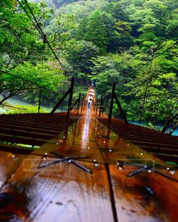自然,絶景,木,森,景色,樹木,休日,吊り橋,秘境,静岡,夢の吊り橋,寸又峡