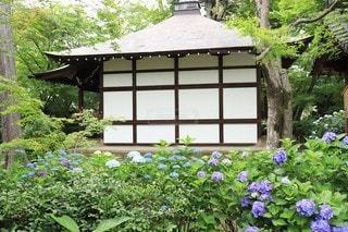 家の前にある花園のクローズアップの写真・画像素材[3384777]