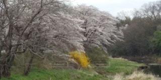 畑河辺の春の写真・画像素材[3072861]