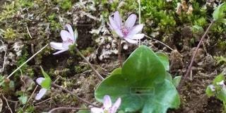 花春の訪れの写真・画像素材[3072889]
