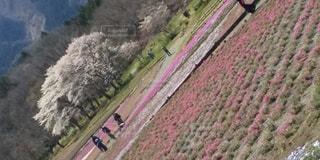 羊山公園に春を探しに来た人々の写真・画像素材[3075093]