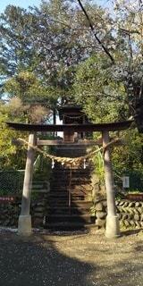 公園,春,桜,緑,神社,新緑