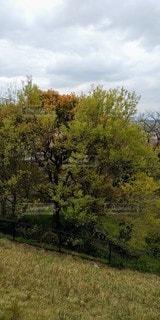 公園の新緑の写真・画像素材[3097081]