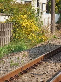 春の線路の写真・画像素材[3099104]