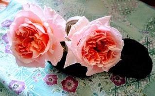 お部屋に薔薇をの写真・画像素材[3117203]
