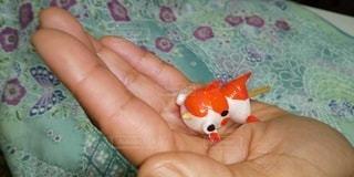 手のひら金魚の写真・画像素材[3122916]