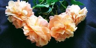 薔薇の花束の写真・画像素材[3195098]