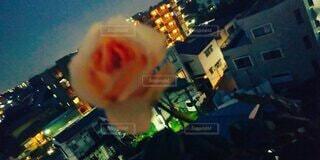 夜のプシュケの写真・画像素材[3617673]