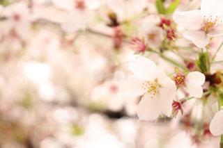 花,春,花束,景色,草木,さくら
