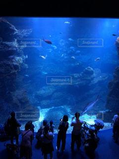 子ども,家族,群衆,魚,水族館,水中,お出かけ,見る