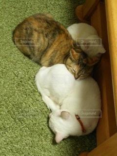 猫,動物,かわいい,ペット,寝る,睡眠,3匹