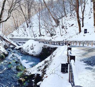 自然,冬,雪,屋外,樹木,冷