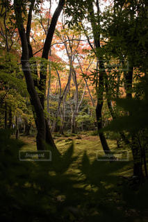 染め始めの紅葉の写真・画像素材[3067601]