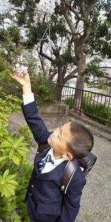 子ども,風景,桜,樹木,少年,桜と1年生