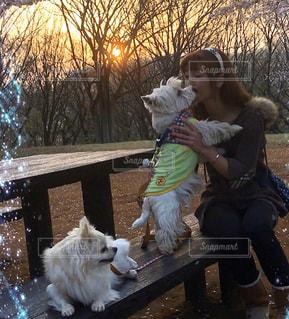 夕暮れ、愛犬と一緒に桜のお花見🌺🌸🌼の写真・画像素材[3070671]
