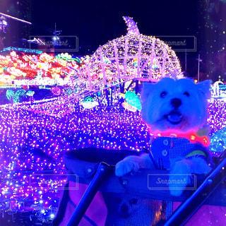 絶景❤️❤️❤️愛犬と一緒にイルミネーション🐾🐾🐾の写真・画像素材[3070674]