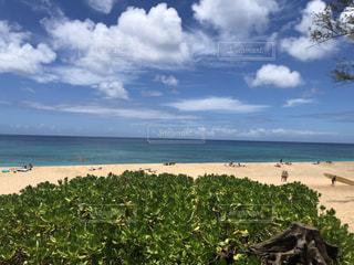 自然,風景,海,空,屋外,ビーチ,雲,海岸,樹木,旅行,ハワイ,眺め,日中