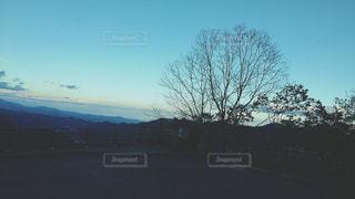 日没夕方の空と木の写真・画像素材[3076415]