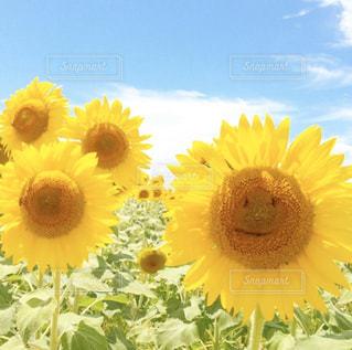 花のクローズアップの写真・画像素材[3073502]