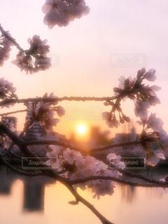 自然,風景,空,花,春,桜,太陽