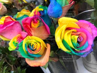 虹色の薔薇の写真・画像素材[3092610]