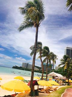 グアムビーチの写真・画像素材[3098052]