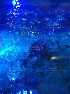 青いアオウミガメの写真・画像素材[3100658]