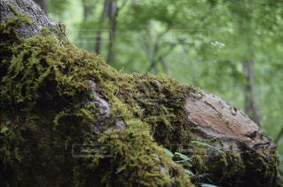 森の生命の写真・画像素材[3111120]